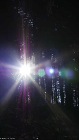 Forêt et lumière